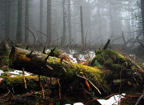 Moss, Tree, Forest, Mountains, Thrown Down, Trunk