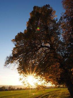Dazzling Star, Sonnenstern, Leaves, Sun, Linde
