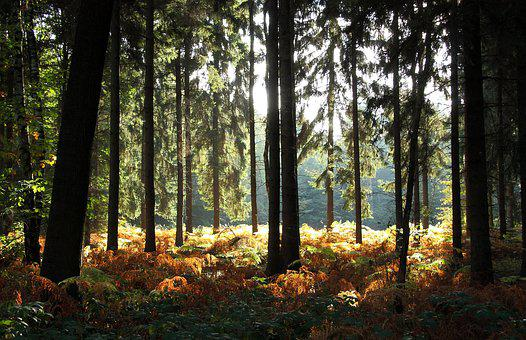 Forest, Trees, Autumn Forest, Fern, Nature