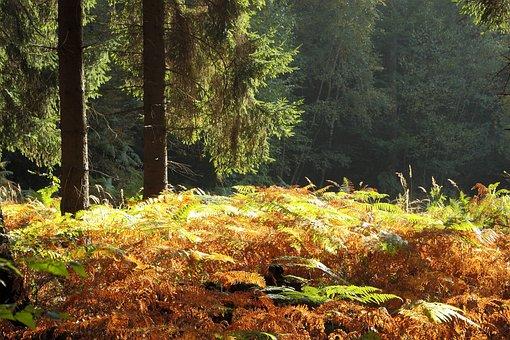 Forest, Autumn Forest, Autumn, Trees, Landscape, Nature