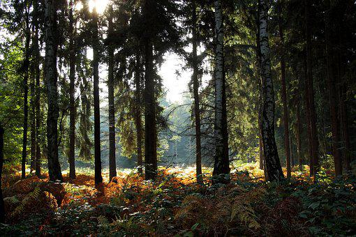 Forest, Glade, Nature, Trees, Autumn, Landscape
