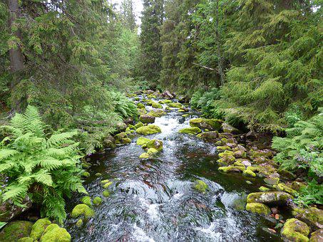 Water Courses, Water, Forest, Summer, Beautifully