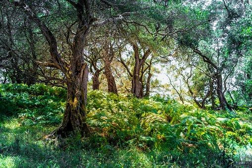Forest, Trees, Fern, Green, Landscape