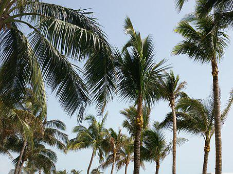 Palm, Trees, Sky, Palm Tree, Tropical, Summer, Travel