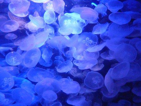 Jellyfish, Aquarium, Underwater, Fish, Organism, Color