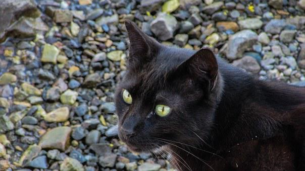 Cat, Stray, Homeless, Beach, Hungry, Looking