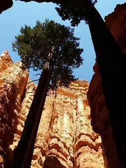 Zion National Park, Pine Tree, Utah, Zion, National
