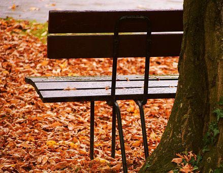 Bank, Autumn, Leaves, Park, Rest, Seasons, Tree