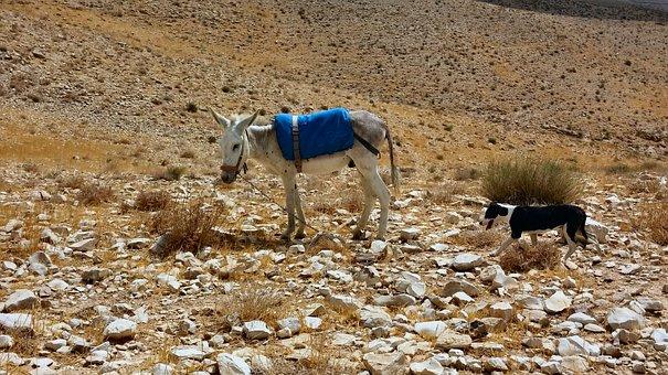 Sand, Desert, Israel, Scenery, Hills, Sky, Donkey, Mule