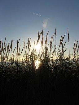 Beach, Marram Grass, Grass, Dunes, Baltic Sea, Nature