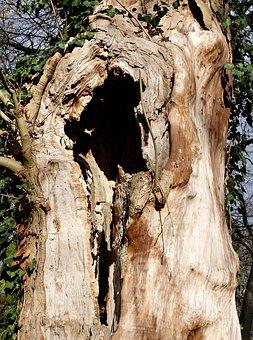 Nature, Forest, Park, Tree, Tree Stump, Log, Mystical