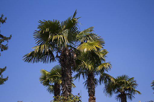 Palm Trees, Sky, Plant, Partly Cloudy, Sun, Green
