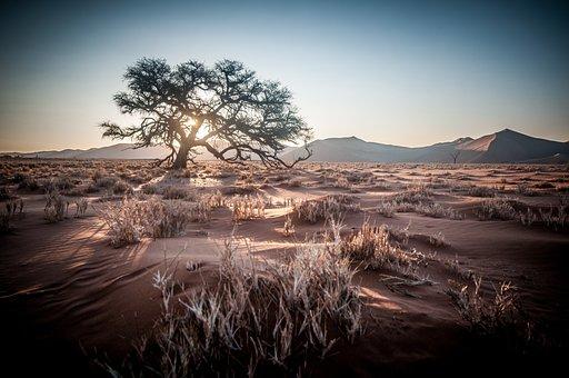 Africa, Namibia, Safari, Sunrise, Sand Dune, Tree