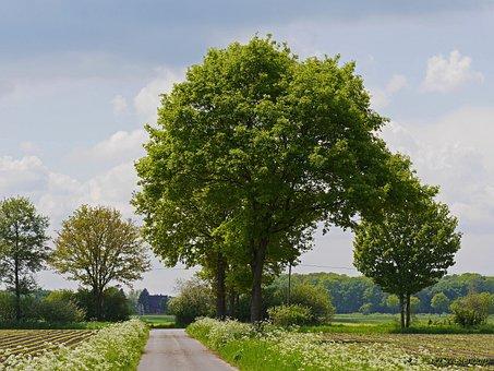 Münsterland, Spring, Fields, Forests, Trees, Foliation