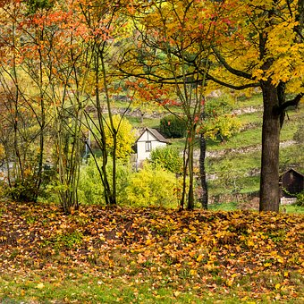 Autumn, Leaves, Green, Yellow, Red, Orange, Cottage