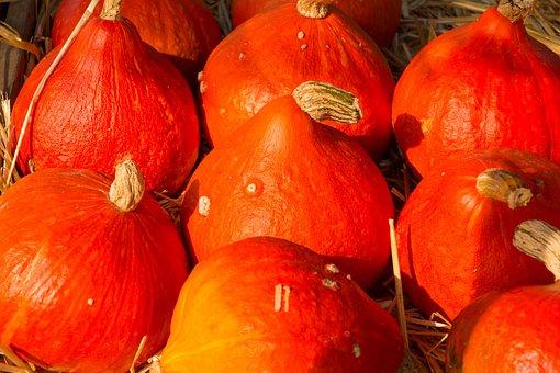 Pumpkin, Autumn, Halloween, Orange, Dare, Crop