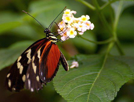 Butterfly, Exotic, Tropical, Insect, Butterfly House