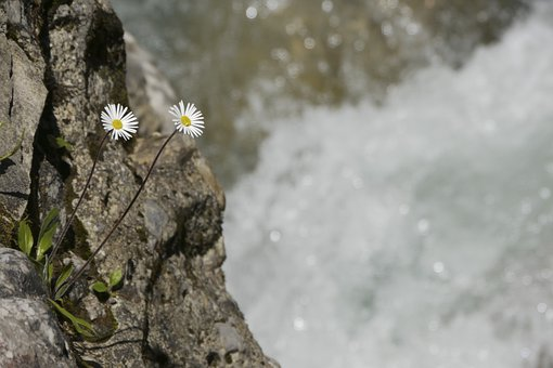 Flowers, Mountain Flowers, Bach, Spring, Water, Melt