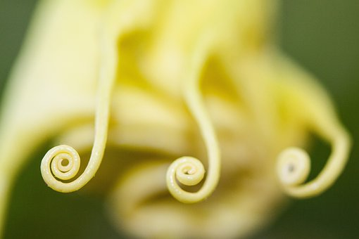 Flower, Plant, Bell Shaped, Flowers, Bloom, Yellow