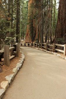 Trail, Forest, Sequoia, National Park, General Sherman