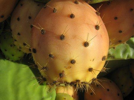 Prickly Pear, Ficus Indica, Cactus, Prickly, Spur