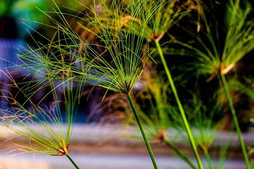 Reeds, Green, Pattern, Nature, Grass, Outdoor, Plant