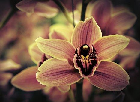 Orchid, Flower, Pink, Lavender, Bloom