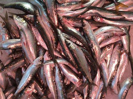 Fish, Seafood, French, Sardine, Mediterranean, Fresh
