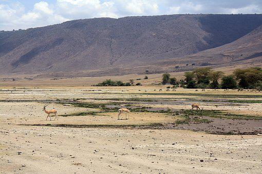 Antelope, Safari, Tanzania, Ngoro Ngoro, Crater, Africa