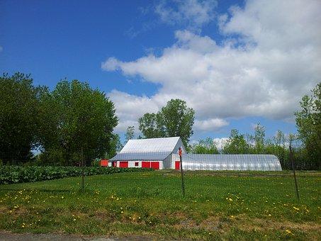 Farm, Barn, Tree, Grass, Corn Grass, Tall Grass, Sky