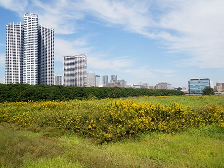 Real Estate, Land, Development Of, Vacant Lot, Building