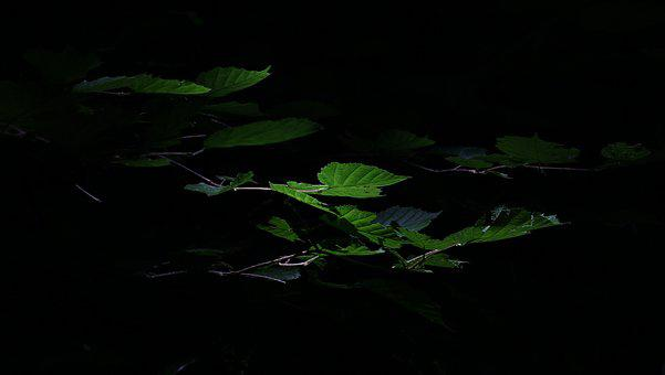 Leaves, Light, Dark, Shadowy, Green, Black, Forest