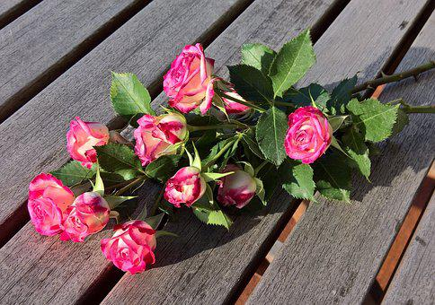 Bouquet, Floribunda, Old Variety, Wild