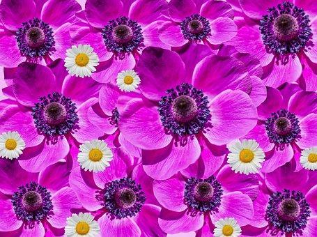 Flowers, Anemone, Poppy, Collage, Purple, Blütenmeer