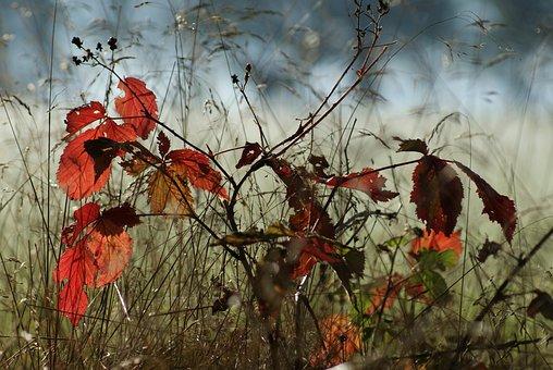 Autumn, Tree, Smaller Tree, Nature, Beech, Sucker
