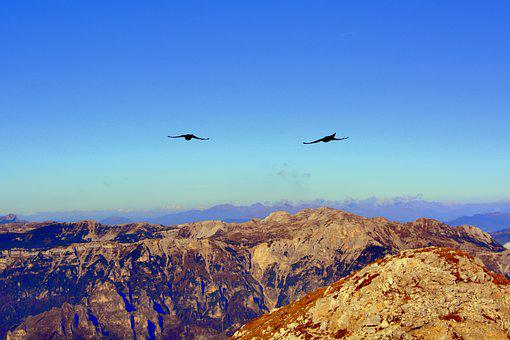 Merlo, Fly, Bird, Mountain