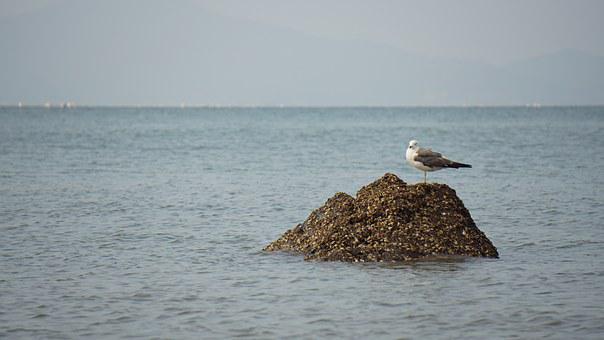 Sea, Squid, Seagull, Sony, A6000