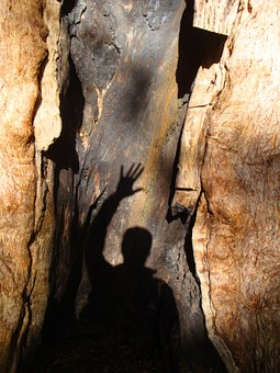 Tree, Trust, Greeting, Adventure, Rest, Self Confidence