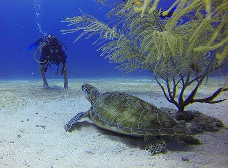 Diver, Turtle, Mexico, Scuba Diving, Meeting