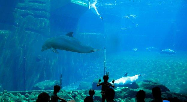 Dolphins, Aquarium, Dolphin, Underwater World, Diving