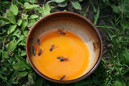Cup, Juice, Fly, Death, Swim, Bees