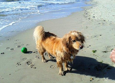 Dog, Sport, Water, Wet, Beach, Sea, Pets, Fun, Healthy