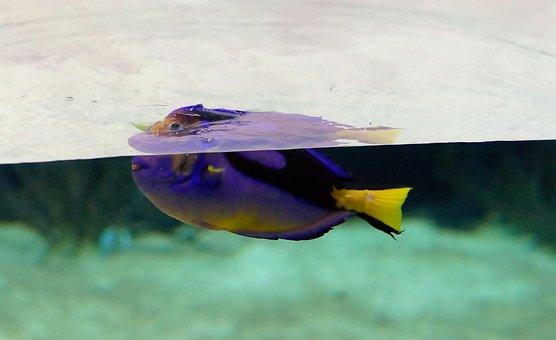Aquarium, Fish, Underwater World, Neon Blue, Toy, Swim