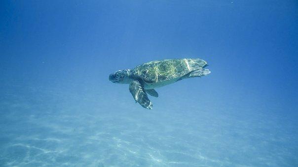 Turtle, Water Turtle, Portrait, Animal, Panzer, Wild