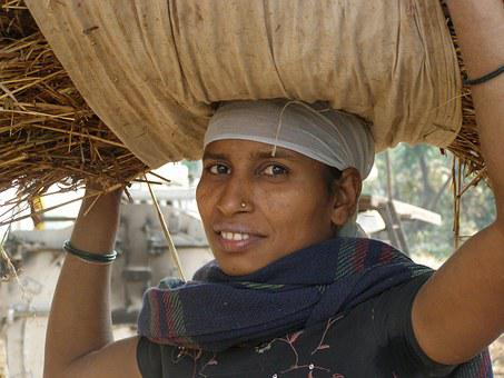 Carrying On Head, Indian, Farm, Worker, Woman
