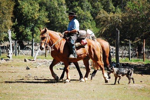 Field, Horse, Cordillera, Cowboy