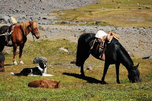 Horse, Dog, Field, Cordillera