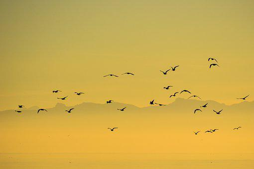 Flock, Birds, Seagull, Group, Nature, Sky, Sunset