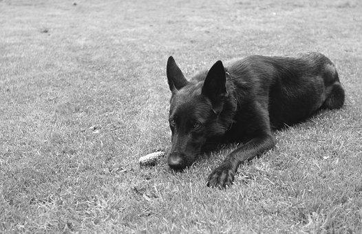 Dog, Animal, Grass, Cute, Pet, Outdoor, Friend, Play