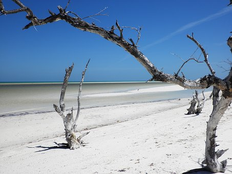 Tropical Beach, Mexico, Island, Dty Log, White Sand